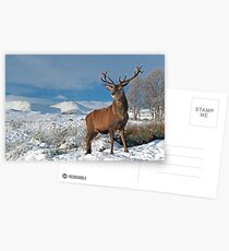 Deer-Stag Postcards