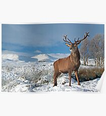 Deer-Stag Poster