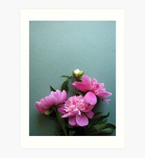 pink peony blooms on green background Art Print