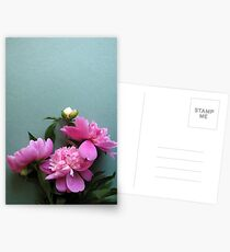 pink peony blooms on green background Postcards