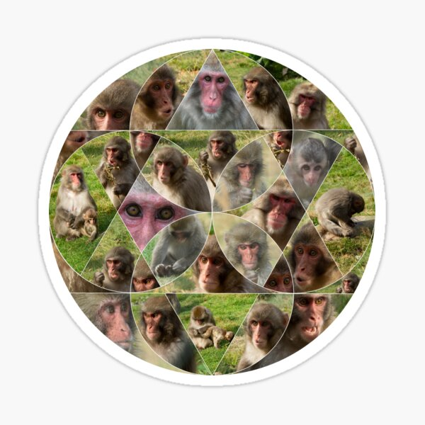 The Many Faces of Snow Monkeys Sticker