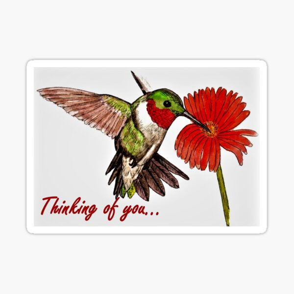 Humming Bird - Thinking of You Card Sticker