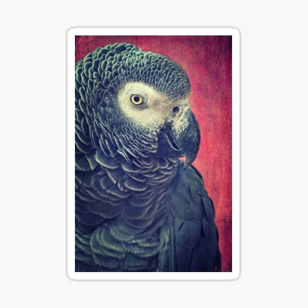 Gray Parrot Sticker