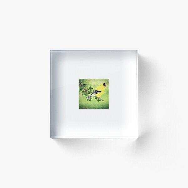 Goldfinch Acrylic Block