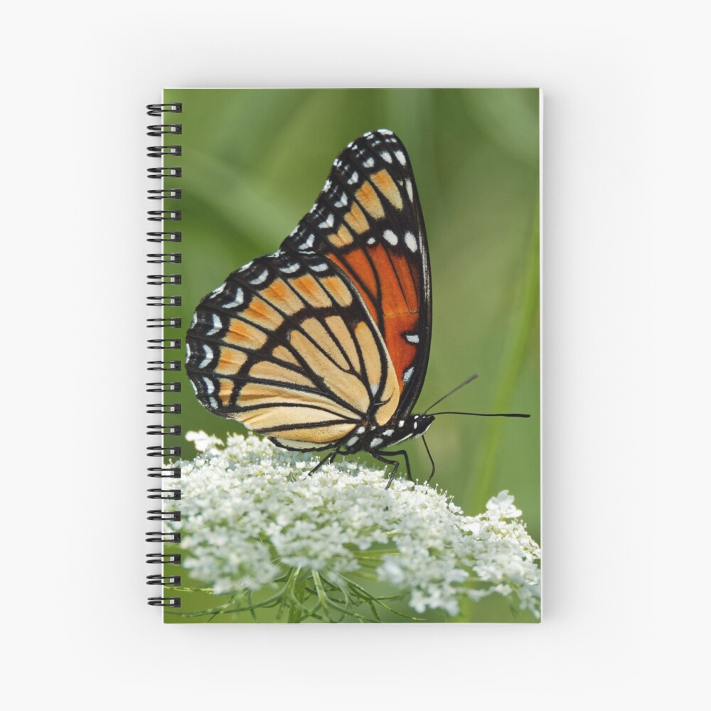 Viceroy Butterfly on Queen Anne's Lace Spiral Notebook