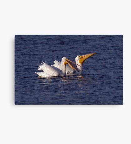 White Pelicans Canvas Print