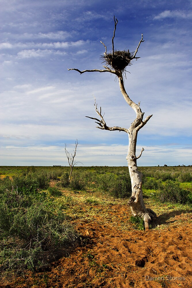 Wedge-tailed eagle nest at Booroorban by Darren Stones