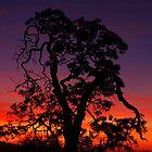 sunset oak by Allan  Erickson