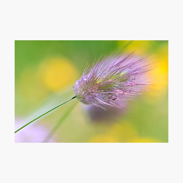 The Lightness of Being - Grasses in the Wind I Photographic Print