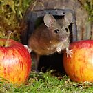 Mouse by Simon-dell