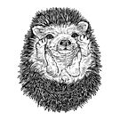 Cute Hedgehog by Adam Regester