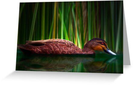 The Duck - Sydney Royal Botanic Gardens, Sydney, Australia by Mark Richards
