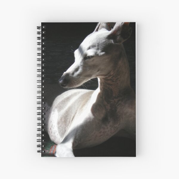 Italian Greyhound in Light Spiral Notebook