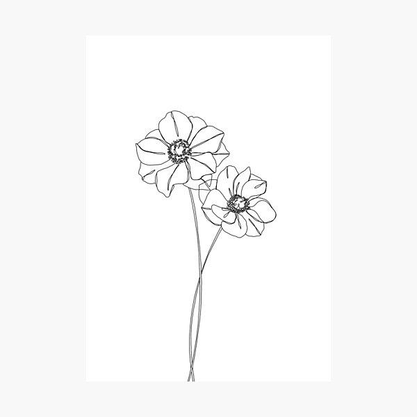 Botanical illustration line drawing - Anemones Photographic Print