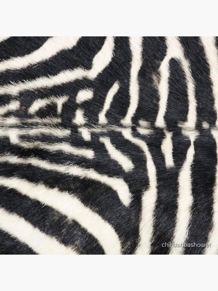 Zebra animal print by chihuahuashower