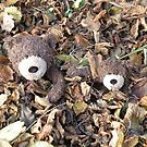 Deano Bears autumn leaves by Dean Harkness