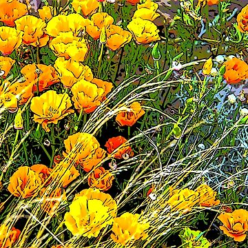 Poppies by indiafrank