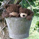 Deano Bears in a bucket by Dean Harkness