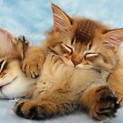 Purrfect cats by sarahnewton