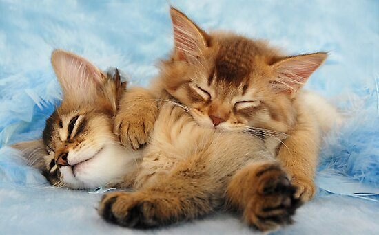 Sleepy kittens by sarahnewton