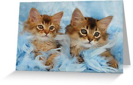Somali kittens by sarahnewton