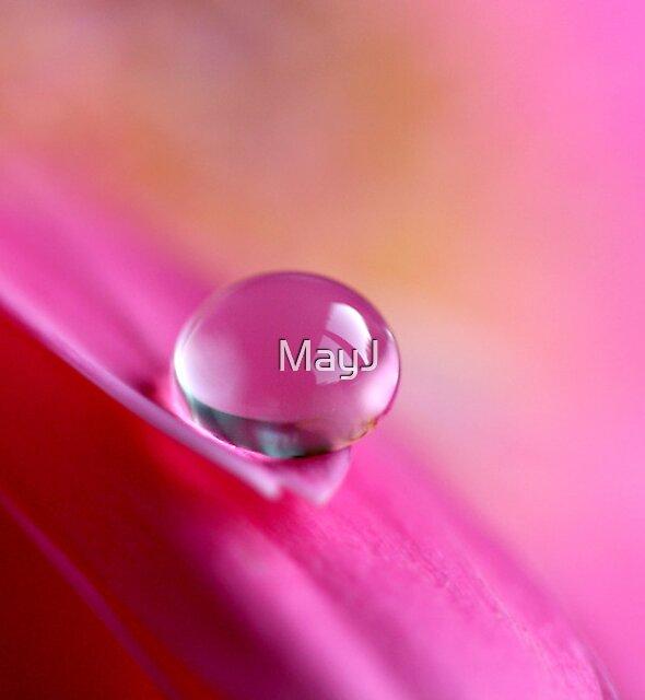 Water drop on pink gerbera. by MayJ