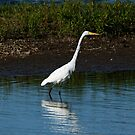 Great Egret on the Shoreline by AriasPhotos
