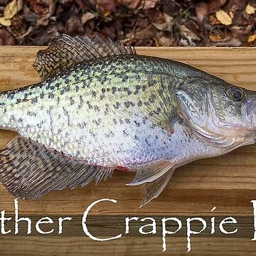 Another Crappie Day by lanrophot