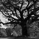 Aged. Tree. Man by T.O. Ang