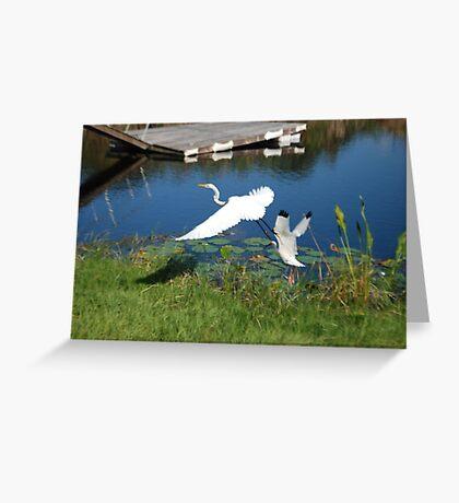 Florida Birds  Greeting Card