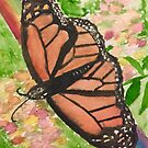 Monarch Butterfly by Lily Yuan