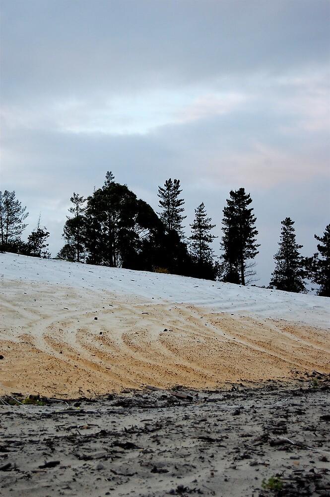 field by Naia