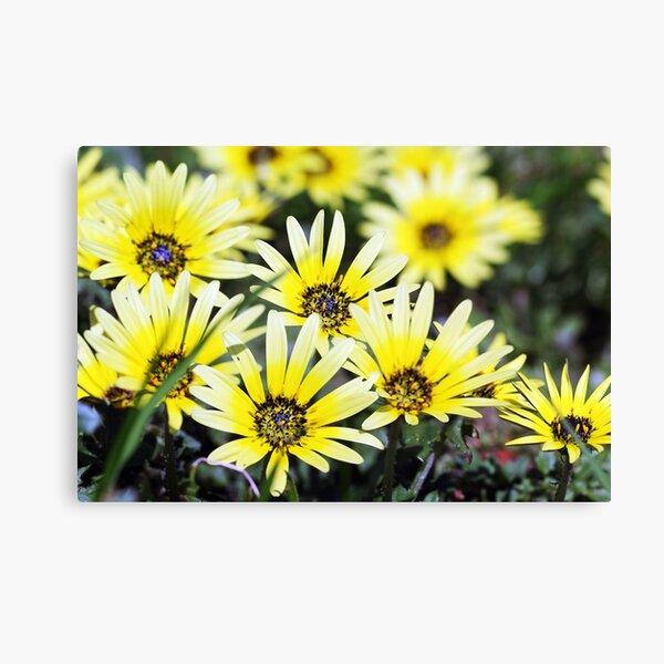 Springtime Yellow Canvas Print