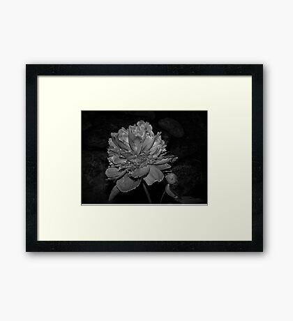 Peony In Black and White Framed Print