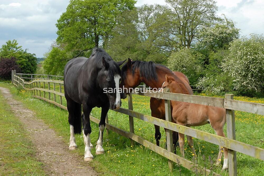 Family of horses by sarahnewton