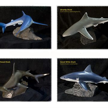 Shark Collection by ashlint