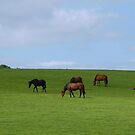 horses grazing and relaxing by sarahnewton
