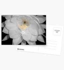 moonflower II Postcards
