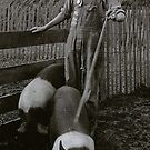Robert Sprout  with his Iowa State Fair Blue Ribbon Award and hogs. Around 1931? by Randy Sprout