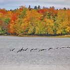 A Baker's Dozen in Maine in the Fall by AnnDixon
