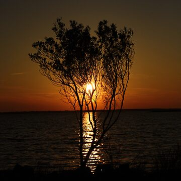 Sunset Behind Tree by GQ1NYC