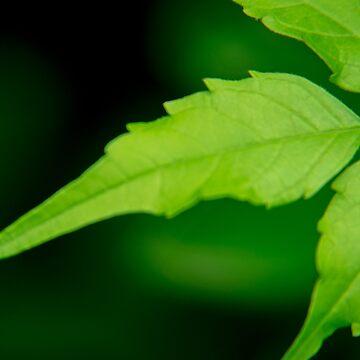 green leaves by TessAndre