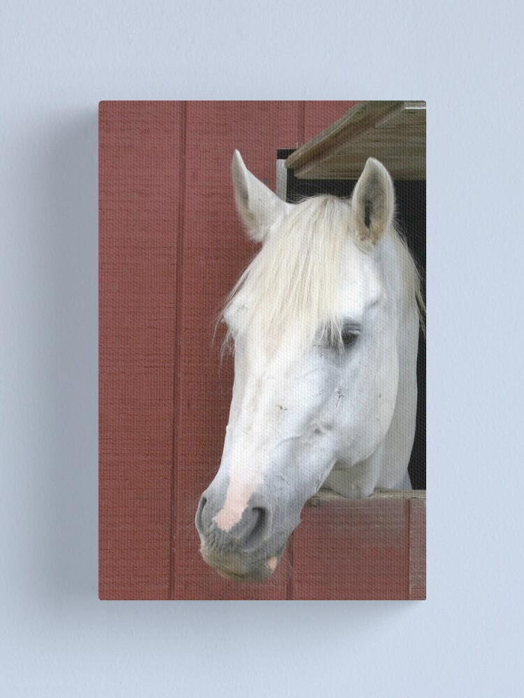 Alternate view of White Horse Canvas Print
