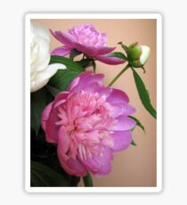 Pink and white bouquet of peonies  Sticker