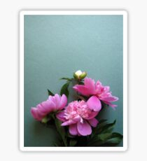 pink peony blooms on green background Sticker