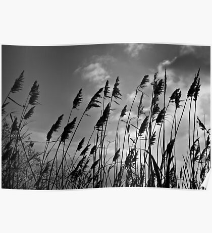 Through the Reeds Poster