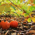 Natural Autumn by Vicki Spindler (VHS Photography)