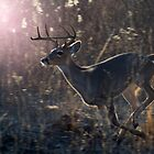 Buck On The Move by Bill Stephens