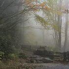 Nantahala National Forest by Bob Hardy