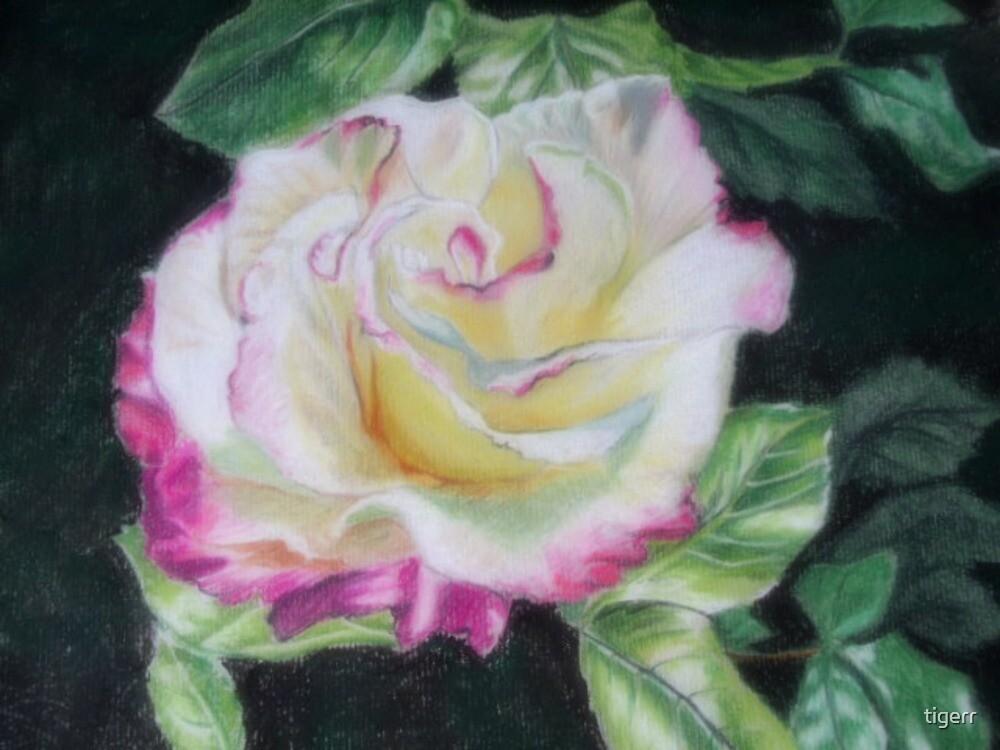 pale rose by tigerr